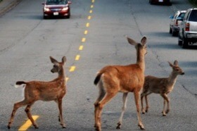 Roadkill Animals are a Surprising Source of Drug Discovery