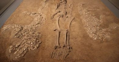 Shifting diets in Bronze Age China point to possible gender inequality
