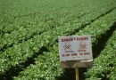 EPA chooses not to ban pesticide after finding neurotoxicity