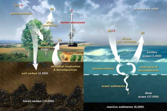 An Exoplanet Model for the Carbon Cycle